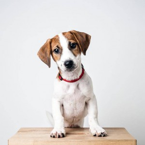 Eliminador de olores de mascotas Febreze Fabric Pet Odor Eliminator